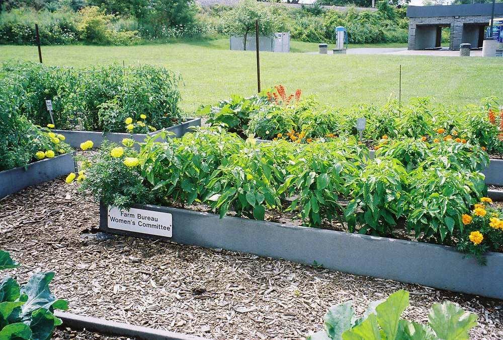 "The Farm Bureau ""Women's Committee"" raised bed"