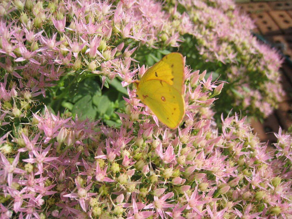 walk_pollinator2.jpg