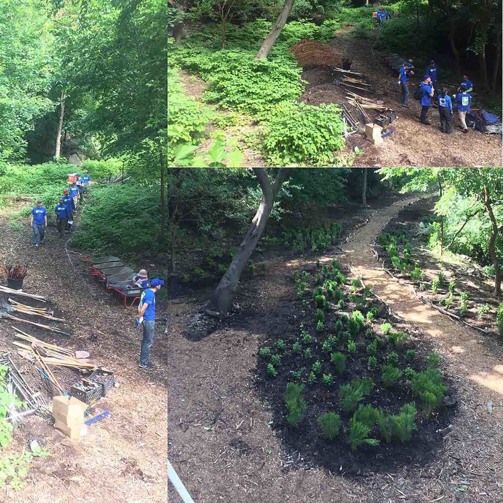 Pernod volunteer day with NYRP