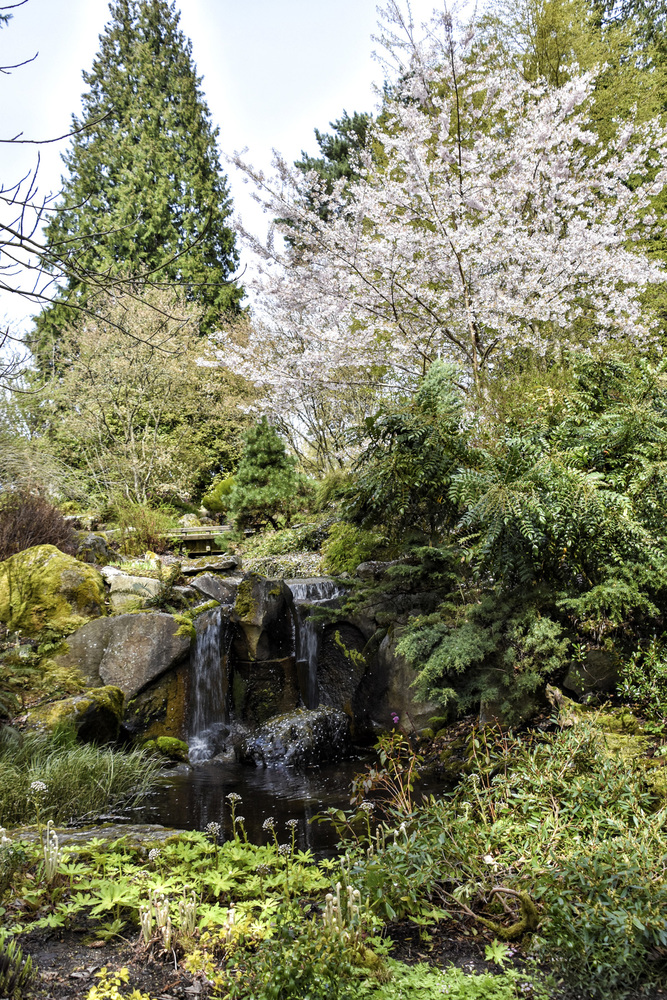A waterfall in the Shorts Ground Cover Garden