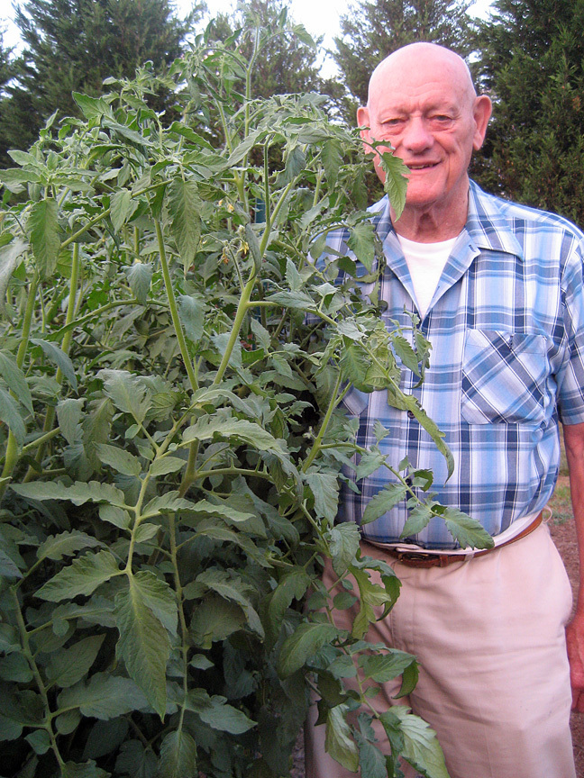 My father Harry with his tomatoes, 2008.