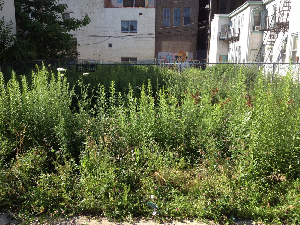 Weeds and overgrown grass took over the abandoned lot located next to the S.A.G.E. Coalition Studio.