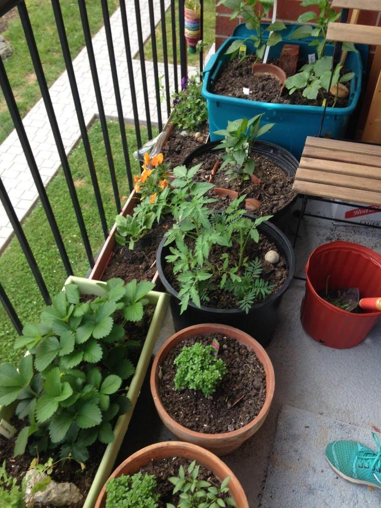Natalie's balcony garden in Washington, D.C., May 2014.
