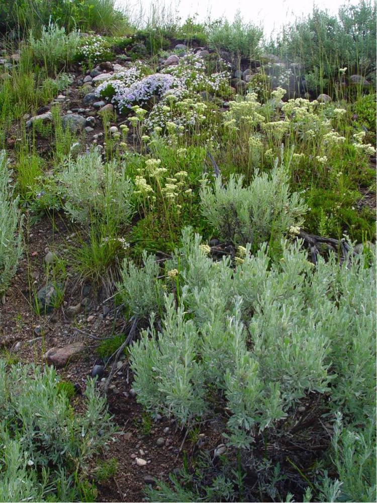 Typical grouping of native plants