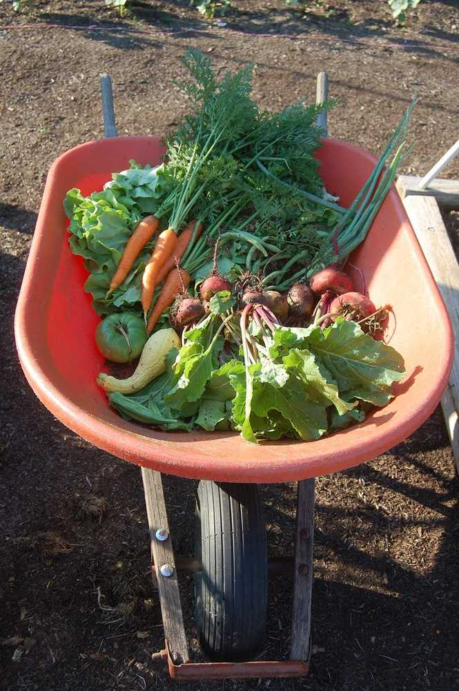 Harvested vegetables