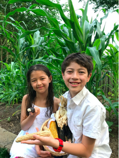 Children with corn cobs from their Popcorn Summer Garden.