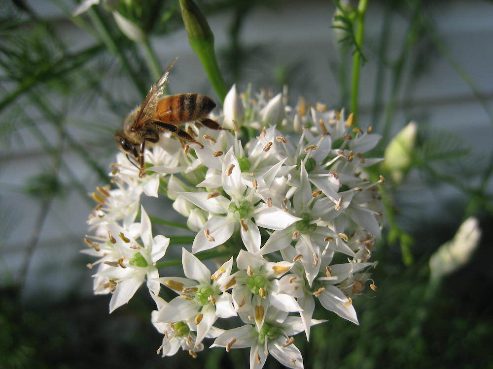 walk_pollinator3.jpg