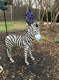 """Zebra sculpture in """"My Church Garden"""" wearing mask during the COVID-19 pandemic."""
