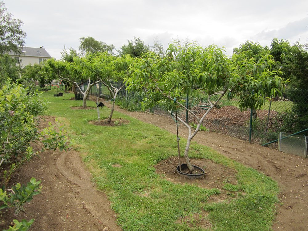 Nicola Ranieri's fruit trees