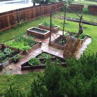 Vegetables growing in raised beds in the author's Pendleton, Oregon garden.