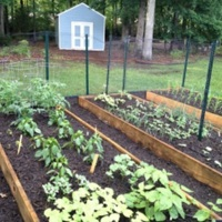 A view of the raised bed garden, shared by neighbors Valerie and Jeni between their backyards in Durham, North Carolina.