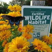 Bowie, Maryland is Certified Community Wildlife Habitat