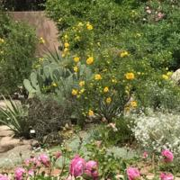 High Desert Rose Garden