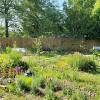A backyard transformation