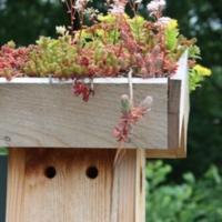 Green roof on a bluebird box