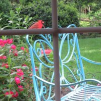 Cardinal perched on a garden bench
