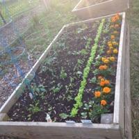 A garden plot in the Berwyn Heights Community Garden in Berwyn Heights, Maryland.