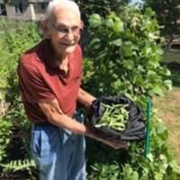 Harvesting the garden