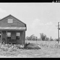 Image of a house with a corn field in the Eight Mile-Wyoming neighborhood of Detroit, 1941. The wall behind separates the area from a white subdivision. Library of Congress, Prints & Photographs Division, FSA/OWI Collection, LC-USF34-063747-D.