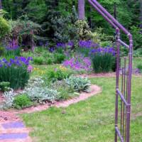The perennial garden, viewed through a copper arbor at the entrance, May 1, 2004. Siberian irises are the star attraction. Over the years, various vines graced the arbor. A favorite was Ipomoea alba, a night blooming morning glory with 6-inch blossoms that glowed on moonlit nights.